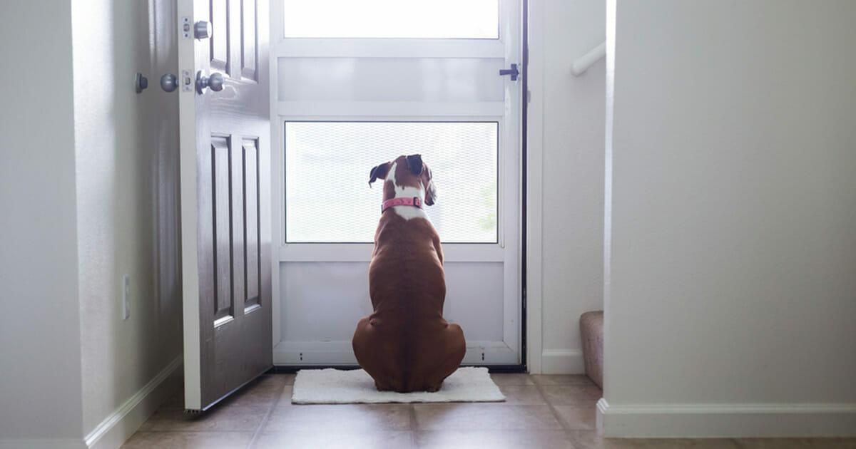 7 Anzeichen, dass Ihr Hund Sie wirklich über alles lieb hat