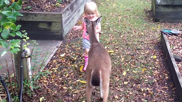 Das Mädchen sieht ein Reh im Garten – ihr Treffen wurde nun zum Internethit