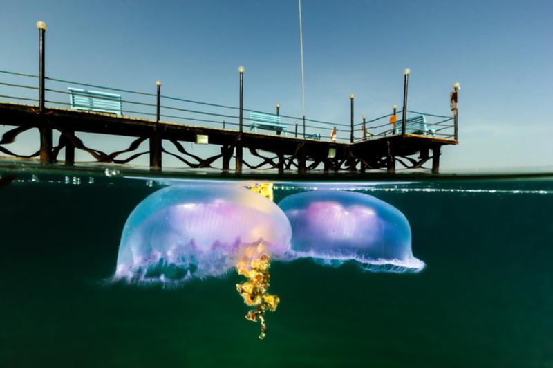 15 eindrucksvolle Unterwasser-Fotos.