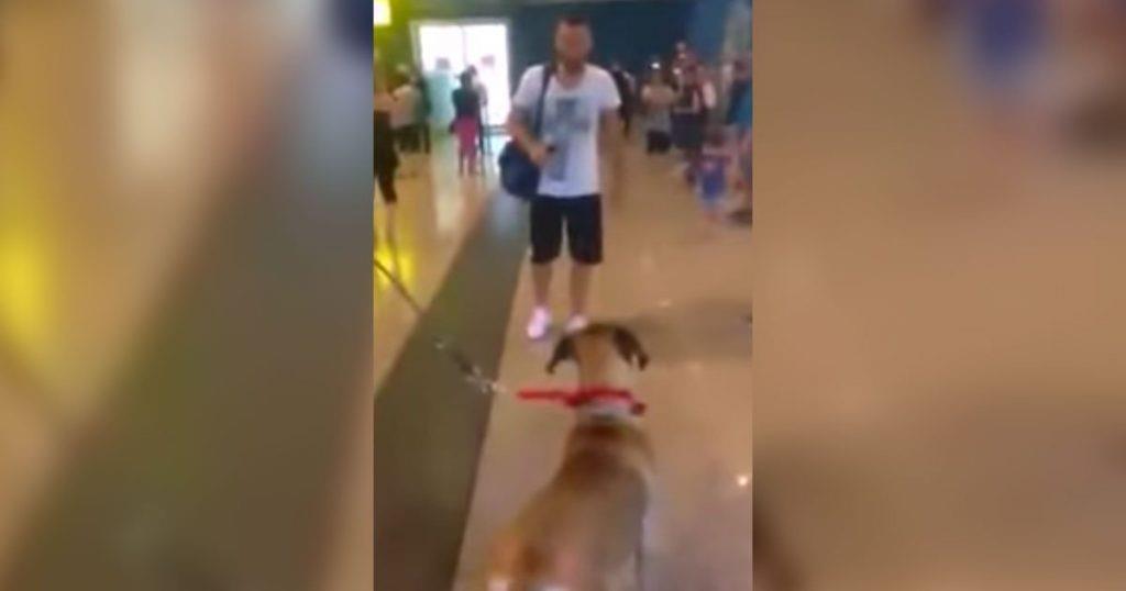 Dieser Hund sah seinen Besitzer für 3 Jahre nicht – seine Reaktion wurde bereits von über 17 Millionen gesehen