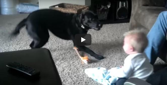 Das Baby lacht unaufhaltsam über den Hund, als dieser versucht, ihn mit allen Mitteln zum Spielen zu bringen
