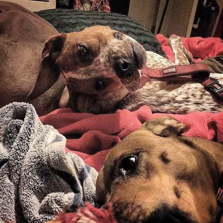 Dieser Hund verwirrt die Menschen weltweit – kannst du den Grund sehen?