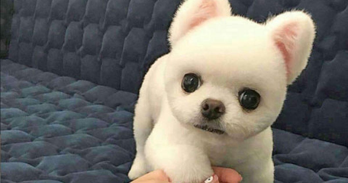 Top 10: Die zehn beliebtesten weiblichen Hundenamen!