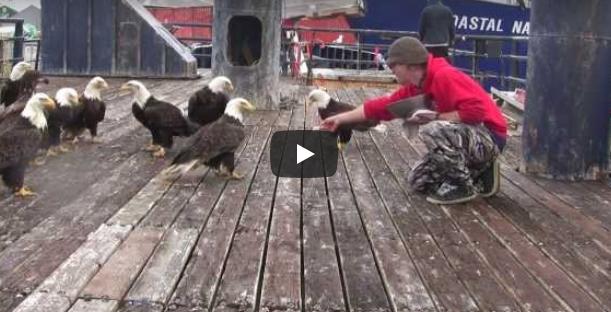 Als diese Adler auf dem Boot des Fischers landen, werden wir Zeuge einer sehr ungewöhnlichen Freundschaft