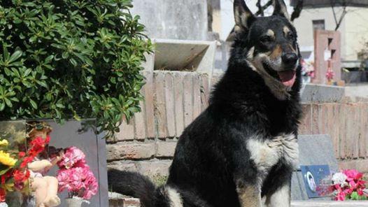 Treuer Hund, der 11 Jahre das Grab seines Besitzers bewachte, verstarb kürzlich
