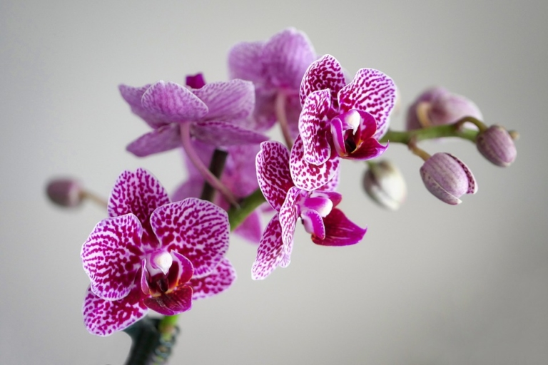 Pflanzen, die positive Energie und Glück in dein Zuhause bringen