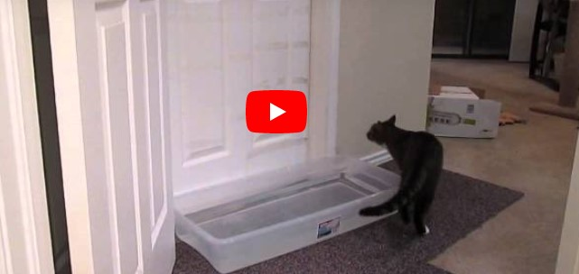 Die Katze darf nicht ins Schlafzimmer – die Reaktion der Katze wurde jetzt 22 Millionen mal gesehen