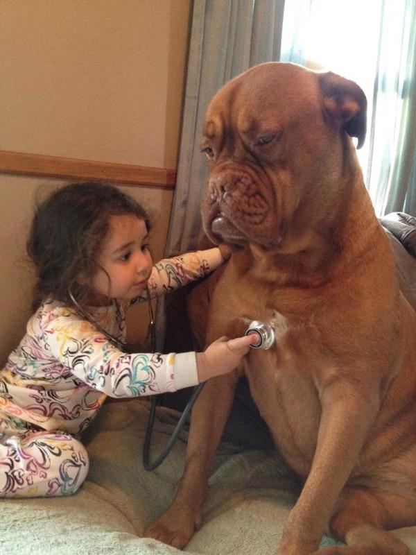 15 Hunde, die wie Geschwister für Kinder sind.