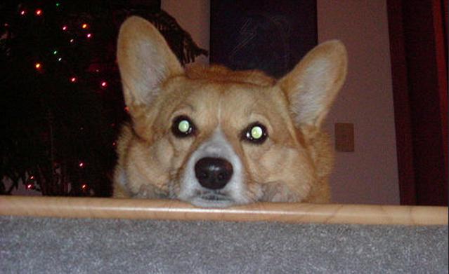 Besitzer erfährt, warum Hund ihn jede Nacht anstarrt.
