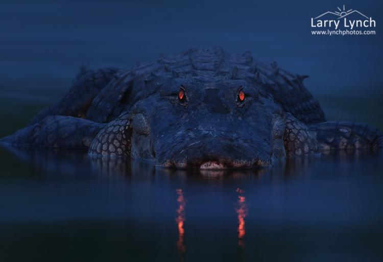 Der Typ hat gerade ein Foto von dem nächtlichen Sumpf gemacht, und als er es sah, konnte er an seine Augen nicht glauben