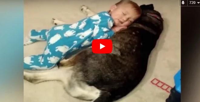 Das Baby schläft immer wieder ein – die Reaktion des Hundes lässt uns einfach dahinschmelzen