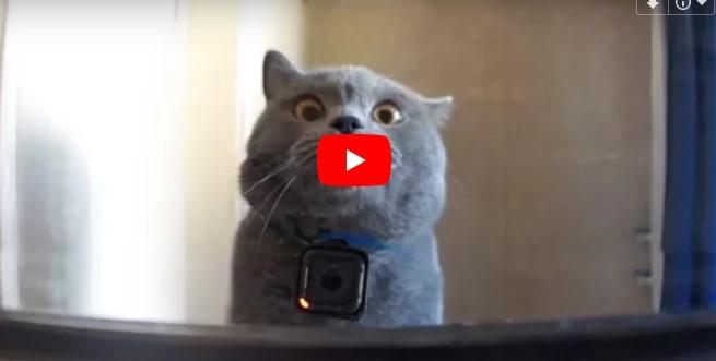 Der Mann bringt eine GoPro Kamera an seiner Katze an, das Resultat ist toll