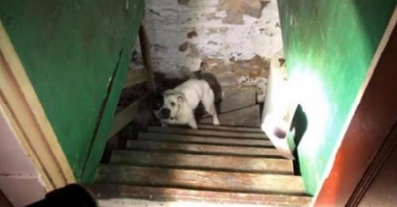 'Beinahe selbst stranguliert': Mann findet Hündin im Keller.