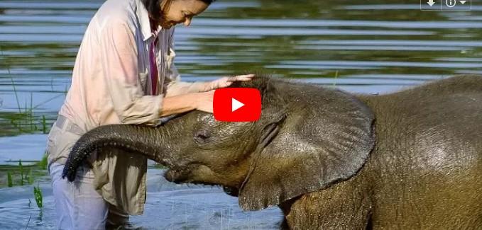 Das Elefantenbaby überwindet seine Angst vor dem Wasser – nach monatelanger Therapie