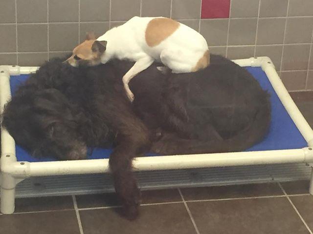 Hunde weigern sich, sich im Tierheim voneinander zu trennen – die Pfleger machen ein einziges Mal eine Ausnahme