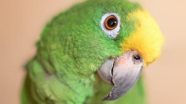 Ein Papagei-Geschichtenerzähler wurde im Internet populär. So ein Märchen über Rotkäppchen hast du noch nicht gehört!
