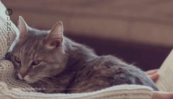 Das passiert, wenn du deine Katze mit zu dir ins Bett nimmst. Bisher habe ich es nur geahnt, aber die Wissenschaft hat es jetzt bewiesen.