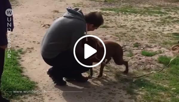 Video: Verlorene Hündin erkennt Herrchen am Geruch wieder.