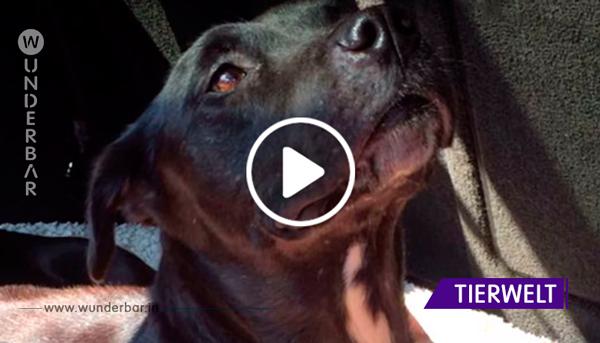 Hündin ist von der Angst gelähmt – da macht diese Tierfreundin das einzig Richtige