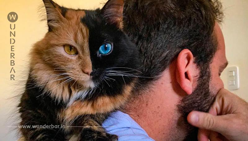 Schau dir diese Katze an   ihre Farbe ist die seltenste der Welt! Die Katze ist eine Chimäre