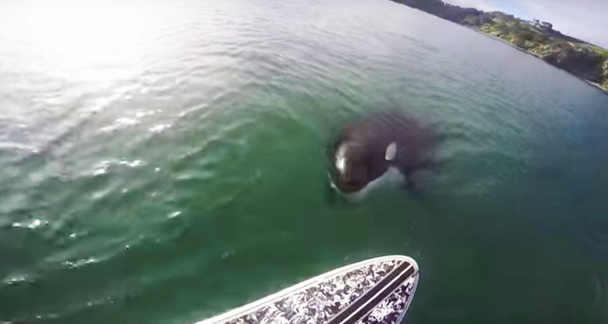 Dieser Junge war mit dem Surfen beschäftigt, aber plötzlich im Wasser sah er es!