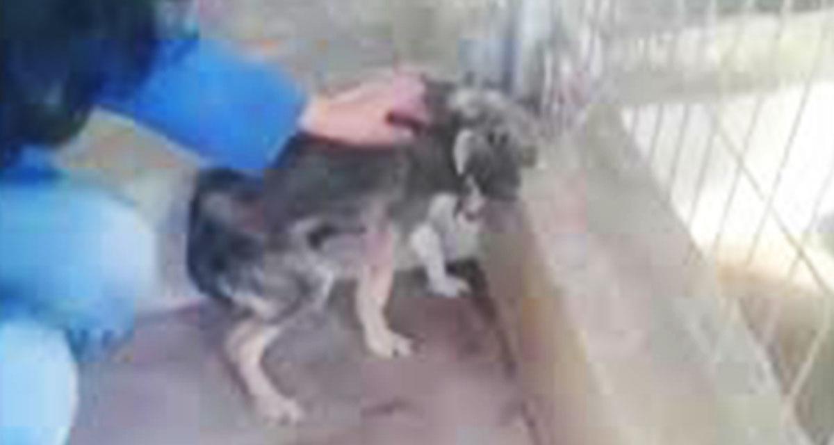 Dieser Hund wurde zum ersten Mal in ihrem Leben gestreichelt! Ihre Reaktion wird Sie zum Weinen bringen!