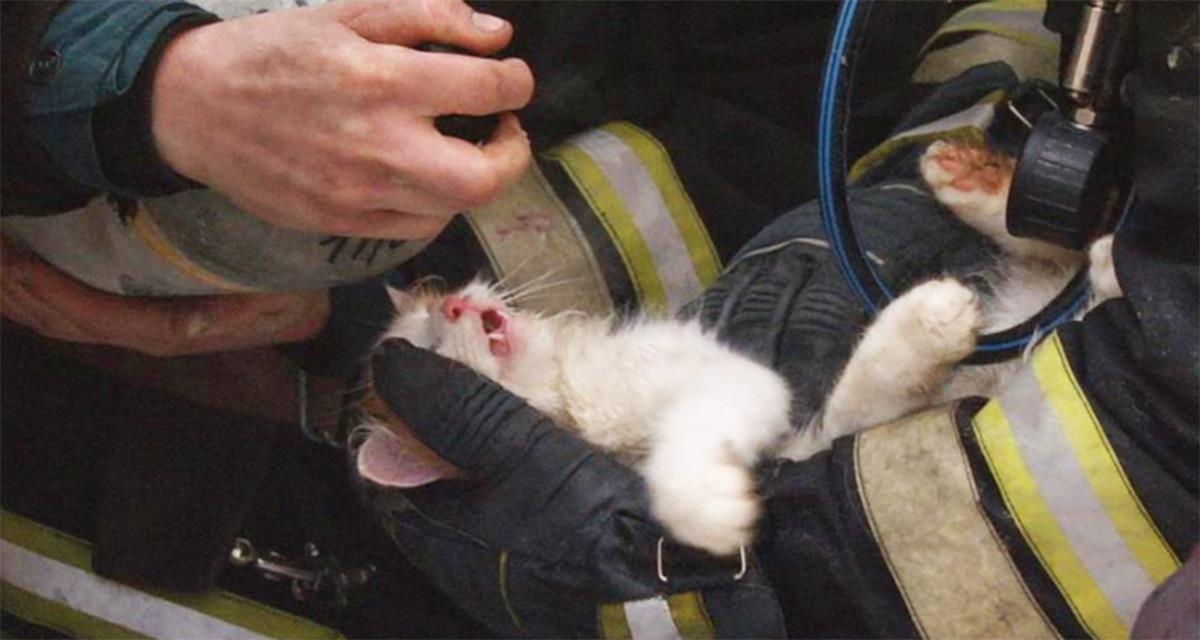 Feuerwehrmänner fanden eine Katze in einer Bräunungswohnung. Was sie taten, berührt zu Tränen ...