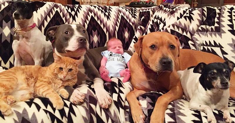 4 Hunde und eine Katze kümmern sich um ein neugeborenes Baby!
