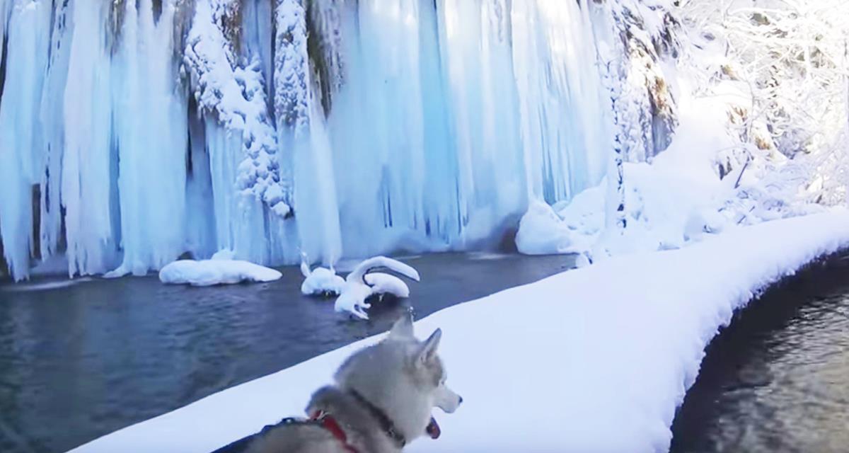 Fantastischer Spaziergang mit Husky. Ich habe solche Schönheit nicht gesehen !!!