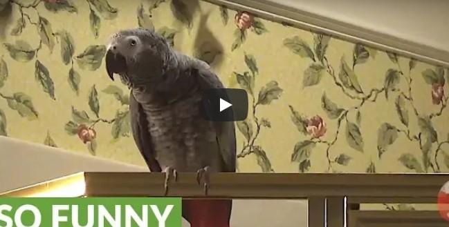 Dieser Papagei hat gelernt, sehr gut zu sprechen – einfach beeindruckend zu sehen!