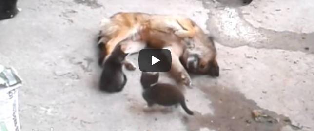 Die Katzenmutter trifft auf einen Hund mit ihren kleinen Kätzchen – was dann passiert, fasziniert Millionen