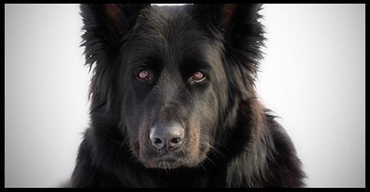 Jeder ignorierte den Werwolf an der Strasse, bis eine Frau zu seiner Rettung ka