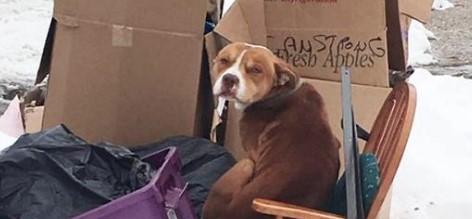 Eine Familie zog um, und ließ den Hund alleine in der Kälte. Er baute sich deshalb eine Unterkunft aus Kartons