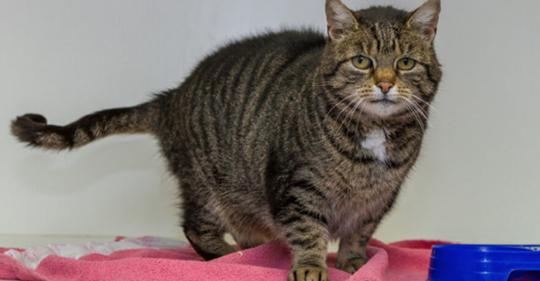 Tierheim sucht mit witziger Anzeige ein neues Zuhause für Katzen-Diva Mrs. Mietz