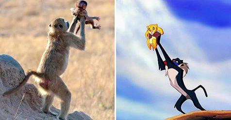 Wie in König der Löwen: Affe hält Baby in die Luft