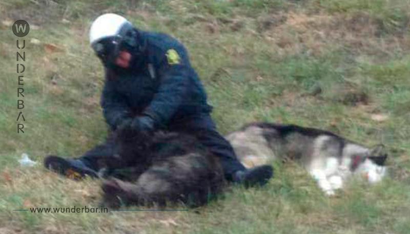 Polizist harrt mit Hunden aus, bis Rettung eintrifft!
