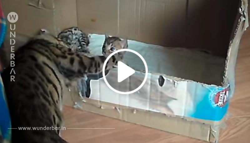 """Die Frau filmt die """"Unterhaltung"""" zwischen Katzenmutter und Baby. Wenn sie die Pfote hebt, schmilzt man einfach dahin."""