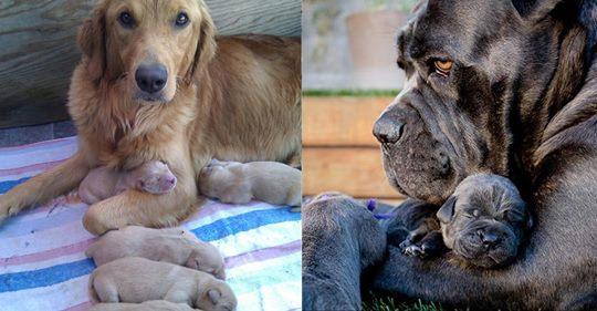 12 Hunde, die genauso aussehen wie ihre Welpen.