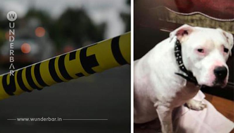 Mann sticht Hund ab, als der versucht, sein Frauchen vor dessen Schlägen zu verteidigen
