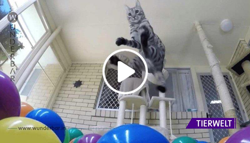Er baut ein Bällebad für seine Katze – deren Reaktionen bringen dich garantiert zum Lachen