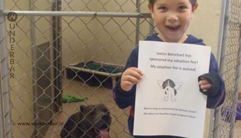 Erst adoptiert er den Hund, dann lässt er ihn im Käfig zurück und geht weg. Aber als er dieses Dokument vorzeigt, jubelt ihm jeder zu.
