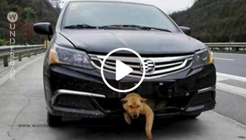 Ein Mann überfährt einen Hund auf der Autobahn ohne es zu merken – 320 Kilometer später kommt ein schwaches Bellen unter dem Auto hervor