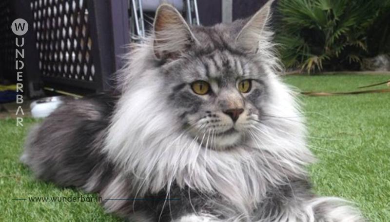 15 Katzen, die gerne ein anderes Tier wären.