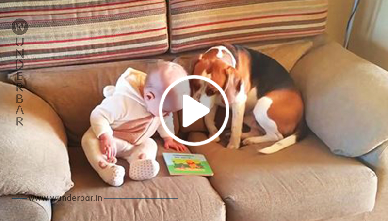 Video: Baby wird rührend von Beagle umsorgt.
