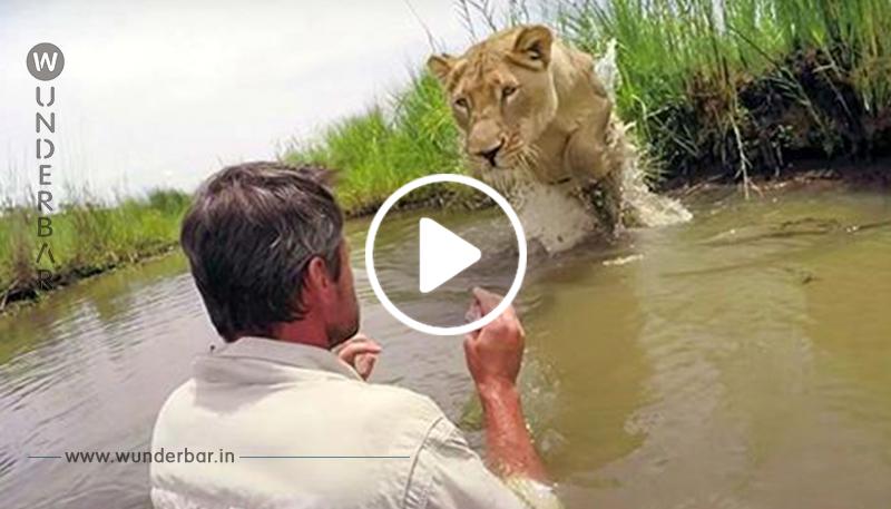 Mann, der zwei Löwenjungen gerettet hat vor 7 Jahren, kommt zurück, um sie von Angesicht zu Angesicht zu treffen