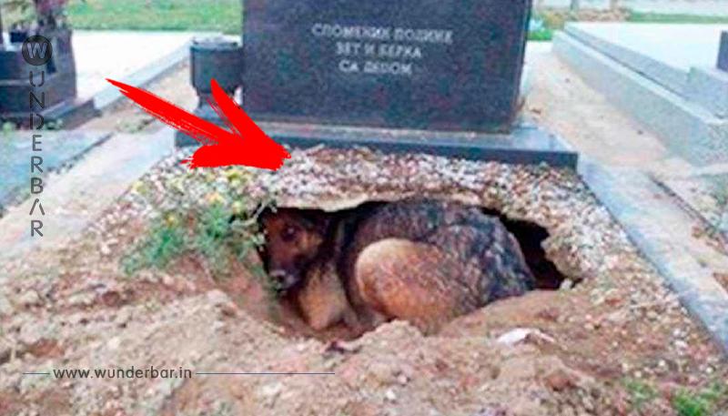 Hündin 'trauert' am Grab seines toten Besitzers – doch in Wahrheit verbirgt sie ein unglaubliches Geheimnis