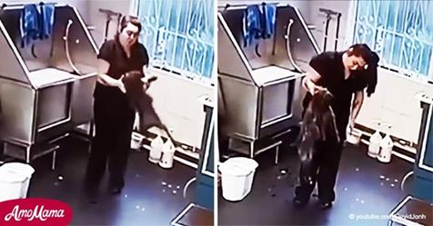 Hundefriseurin packt Hund grausam am Hals und schüttelt ihn vor laufender Kamera