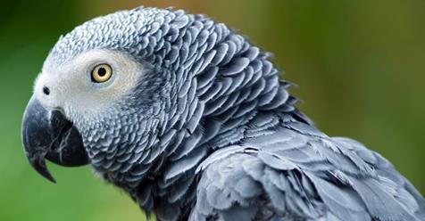 Eine Frau lässt ihr Tier alleine zuhause – der Papagei bestellt fleißig bei Amazon
