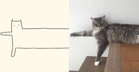 15 Katzen Zeichnungen und ihre Originale.