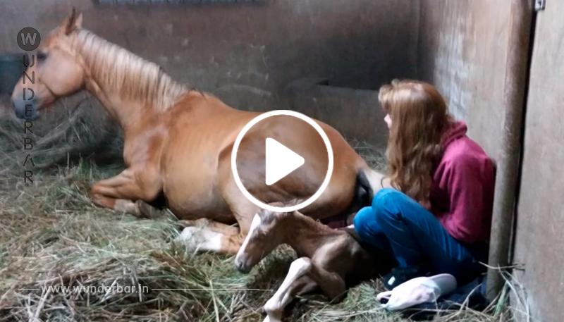 Pferd bringt Fohlen zur Welt – und ihre Nachgeburt hat der Besitzerin die Sprache verschlagen